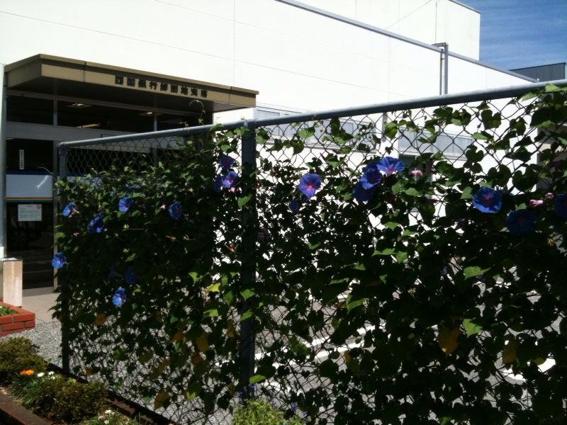 四国銀行 卸団地支店のフェンス